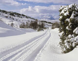 Path To Rhidarroch, Rhidarroch, Inverpolly, Scotland, Spring, gorse, bloom, Siberia, blast, winter, snow, track, landrov photo