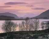 Pink Droma, Loch Droma, Highlands, Scotland, pine, birch, silhouetted, An Teallach, snow, reflected, pink, clusters  photo