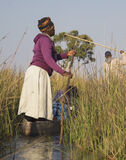 Poling Okavango Delta 2, Okavango Delta, Botswana, Africa, sunrise, poled, village, dugout, canoes, narrow, passages photo