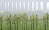 Poplar Echos, Culloden, Highlands, Scotland, viaduct, arches, pattern, trees, teeth, comb, poplar  photo