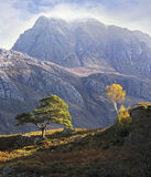 Pride of Place, Loch Maree, Torridon, Scotland, trees, perspective, mountain, Slioch, golden, birch, scots pine, slope  photo