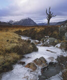 Raw, Rannoch Moor, Glencoe, Scotland, skeeton, tree, profile, survived, iconic, branches, winter, stream, freeze, grey,  photo