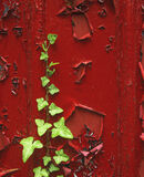 Red Shed Green, Blairs Loch, Moray, Scotland, wooden, boat, Forres, painting, coat, peeling, textures, leaf, ivy, new, r photo