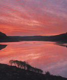 Royal Blood, Loch Lurgainn, Inverpolly, Scotland, winter, morning, sunrises, still, reflection, birch, scrub, silhouette photo