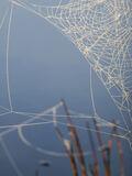 Rusky Lacework, Loch Rusky, Trossachs, Scotland, morning, autumn, magical, embroidered, strung, dew, frozen, mist, cobwe