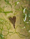 Tugging On Heart Strings, Cummingston, Moray, Scotland, tiny, intimate, beach, lobe, seaweed, depression, sandstone, hea photo
