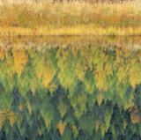 Sedge and Fir, Glen Cannich, Highland, Scotland, grass, stream, glides, sedately, moorland, expanse, reflected, larch  photo