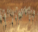 Sienna Reeds, Loch Clair, Torridon, Scotland, winter, dawn, Beiin Eighe, tangerine, reeds, bent, frost, reflected, disto photo