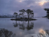 Slattadale Blush, Slattadale, Torridon, Scotland, Scots Pine, trio, island, gently, dawn, silhouetted, ripples, water, i photo