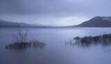 Slattadale Gloaming, Slattadale, Highlands, Scotland, birch, brush, marooned, Loch Maree, moody, blue, sunrise, water   photo