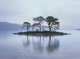Slattadale Island, Slattadale, Torridon, Scotland, cold, dreary, understated, soft, light, island, trees, reflection, Sl photo