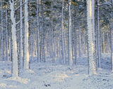 Snow Spattered, Lettoch, Speyside, Scotland, lousy, weather, freezing, snow, wind, blasted, Scots Pine, forest, trunks,  photo