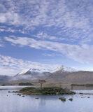 Solitaire, Rannoch Moor, Glencoe, Scotland, beautiful, winter, morning, motionless, mist, island, tree, snow, Blackmount photo