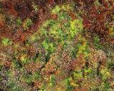 Sphagnum Sponge, Dava Moor, Moray, Scotland, spongy, carpet, intense, colour, red, green, fighting, attention, mosses photo