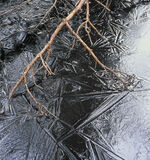 Splinters, Loch Garten, Cairngorm, Scotland, spikey, ice, crack, puzzle, patterned, broken, red, scots pine, twigs, comp photo