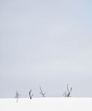 Still Life Hunbora, Hunbora, Senja, Norway, straggly, birch, snags, struggling, drifted, snow, deep, elemental, stark, s photo