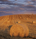 Straw Curlers, Forres, Moray, Scotland, bales, straw, oriented, slope, sunset, blush, stalk, shadow, fence, posts,   photo