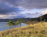 Sublime Pine, Loch A Chroisg, Achnasheen, Scotland, loch, coloured, mountains, water, trees, morning, sky, illumination photo