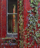 Take Over Bid, Blairs Loch, Moray, Scotland, old, boat shed, summer, rain, soft, perpendicular, building, ivy, leaves, w photo
