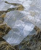 Torn Ice Sheets, Loch Morlich, Aviemore, Scotland, winter, frosts, ice, skin, frozen, grasses, fractured, surface  photo