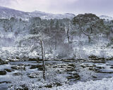 Torridon Pine Grove, Kinlochewe, Torridon, Scotland, snow, impressive, plantations, Scots Pine, native, trees, river photo
