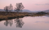 Twilight Loch Ba, Loch Ba, Glencoe, Scotland, sunset, loch, motionless, reflection, twigs, tracery, birch, trees, sky    photo