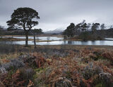 Twilight Loch Tulla, Loch Tulla, Highlands, Scotland, raw, winter, entwined, Scots pine, trees, palette, red, brown, gre photo