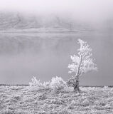 White Lightning Tree Mono, Loch A Chroisg, Achnasheen, Scotland, tree, old, frost, alone, chilling, silent, deathly, fro photo