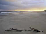 Windswept, Lossiemouth, Moray, Scotland, beautiful, soft, winter, light, sand, morning, wind, blown, wood, drifted, anch photo