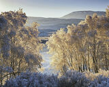 Winter Loch Achanalt, Loch Achanalt, Achnasheen, Scotland, dazzling, brilliance, cold, winter, morning, curtain, birch t photo