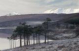 Winter Loch a Chroisg, Loch a Chroisg, Achnasheen, Scotland, muted, palette, trees, still, freezing, mist, frost  photo