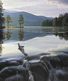 Winter Morning Loch Eilein, Loch An Eilein, Cairngorm, Scotland, winter, still, frozen, stream, two, pines, ice, snag photo