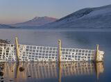 Winter Restriction, Loch a Chroisg, Achnasheen, Scotland, wire, fences, post, rime, frost, golden, blue, frozen, ice, sk photo