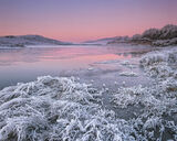 Winter Rose, Loch Achanalt, Achnasheen, Scotland, cold, freezes, ground, crunch, stiff, hoar, frost, sunrise, twilight  photo