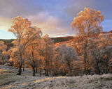 Winter Warmer, Speyside, Highland, Scotland, biter, frost, Grantown, low, temperatures, sun, rays, fiery, red, burn, bea photo