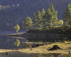 Affric Pine Islands