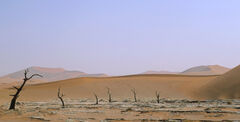 Alien Antenna, Dead Vlei, Namibia, Africa, scene, dead, trees, bizarre, skywards, gradient, colour, red, sand, Martian,