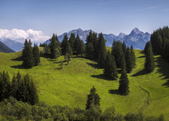 Alpine Meadow 2, Annecy, Haute Savoie, France, mountains, alpine, altitude, conical, trees, lush, green, gorgeous, blue