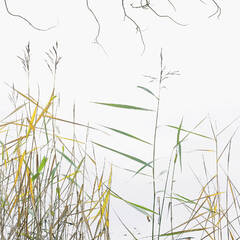 Art At The Edge, Loch Achray, Trossachs, Scotland, scenic, lochs, reeds, yellow, green, leaves, curly, twigs, etched, br