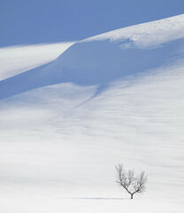 Art Of Snow 10, Anderdalen Nat Park, Senja, Norway, National Park, birch, trees, trunk, blue, shadows, winter, purity, m