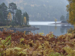 Autumn Drizzle Glen Affric