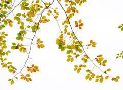 Autumnal Antennae