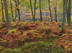 Autumn Parting Glen Affric, Glen Affric, Highlands, Scotland, curtain, birch, drizzled, gold, green, leaf, beautiful, be