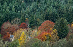 Autumnal Shroud Struy
