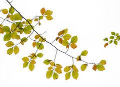Autumnal Spray