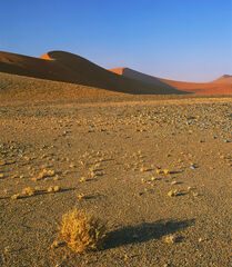 Barren, Sossusvlei, Namibia, Africa, iron, orange, sand, desert, salt pan, dessicated, tumble weed, soft curves, dune, r