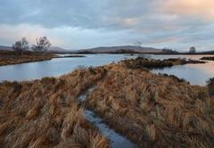 Blossoming Dawn Loch Ba, Rannoch Moor, Glencoe, Scotland, raining, deluge, soft, colour, sunrise, grasses, luminous, glo
