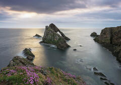 A sunrise visit to the cliff tops on a summer morning with pink thrift adorning the cliff tops at Portknockie and Bowfiddle rock beyond in swirling sea.
