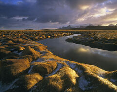 Brushed Gold Vollen, Yttresand, Lofoten, Norway, Vollen, canals, golden, brushed, grass, sunrise, reflected, shine, snow