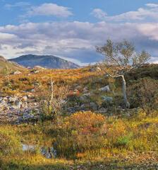 By Loch Maree